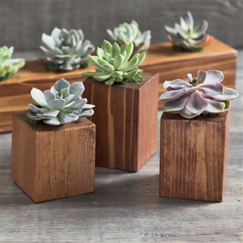 succulent holder cedar succulent holders vivaterra