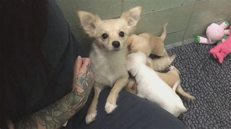abc puppy reunites with 4 puppies in heartwarming abc news