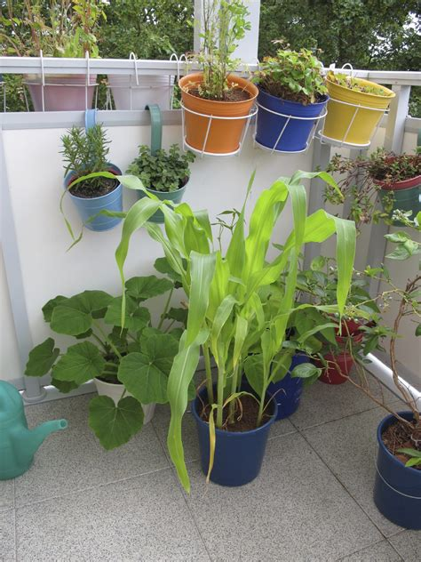 porta growing with vegetables best veggie plants for