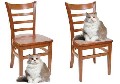 Cat On The Chair by Wittgenstein Frege Amp The Context Principle Issue 106