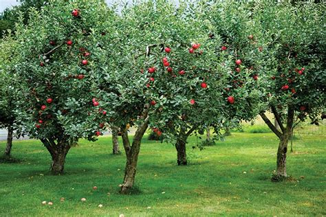 adding an orchard to your garden old house online old