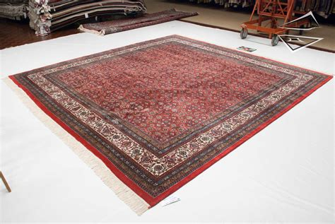 10 X 11 Rug by Herati Design Square Rug 10 X 11