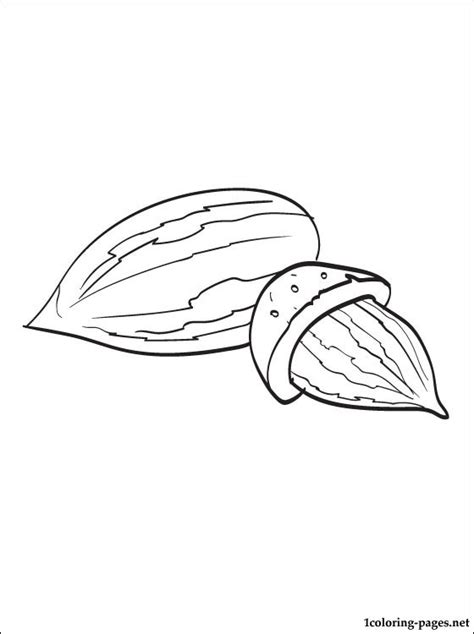 almond coloring page coloring pages