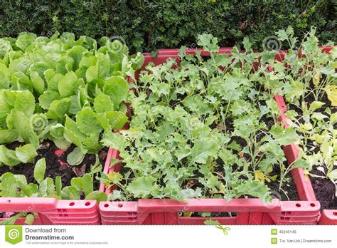 plastic garden boxes for vegetables grow vegetables in a plastic box stock photo image