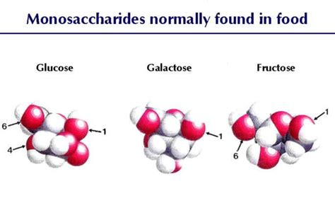 carbohydrates generally a molecular formula ch 5 the structure and function of large biological