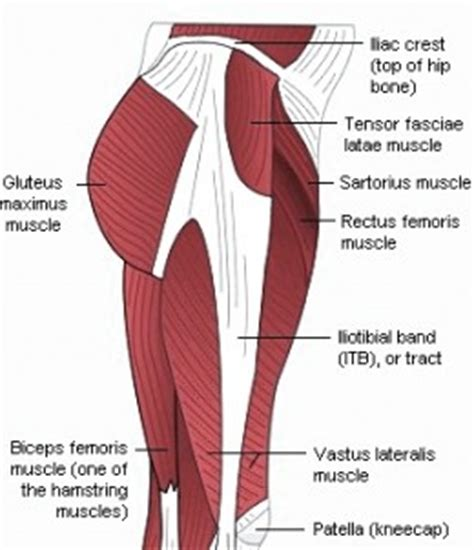 glute muscles diagram top gluteus muscles diagram images for tattoos
