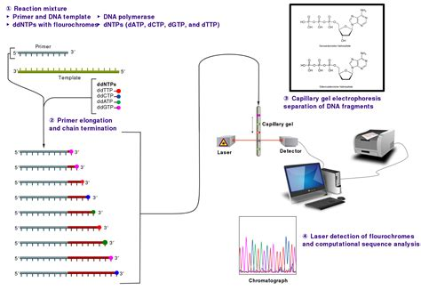 illumina sequencing protocol sanger sequencing