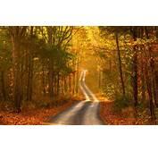 Autumn Forest Road Scenery  HD Desktop Wallpapers 4k