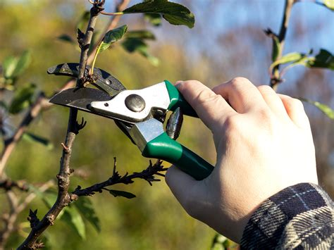 Gardenia Pruning How And When To Prune Plants Gardentipz