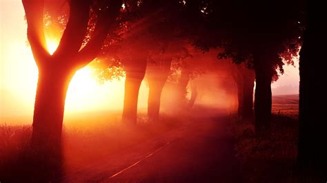 sunrise nature trees red fog mist aleksandra wydrych
