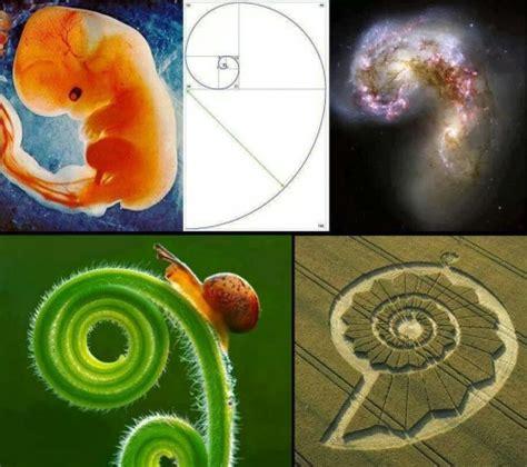 golden ratio dna spiral fibonacci sequence golden ratio phi in nature dna