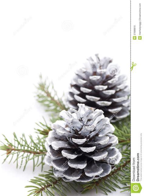 Christmas Evergreen Centerpieces - silver pine cones stock photo image 27688810
