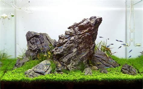 Setup Aquascape by Best 25 Freshwater Plants Ideas That You Will Like On