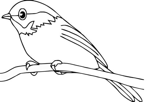 bird pictures to color cardinal bird images free coloring home