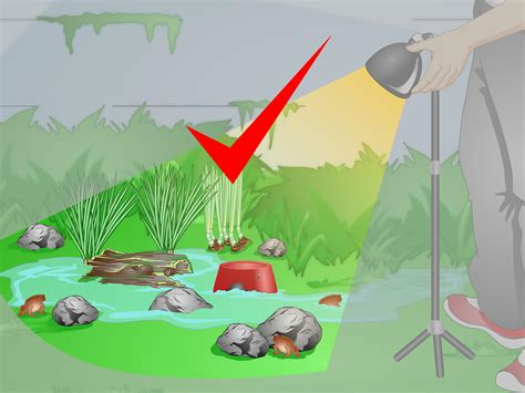 create  habitat   toad  steps  pictures
