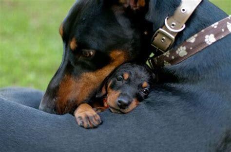 puppy hug puppy hug 1funny