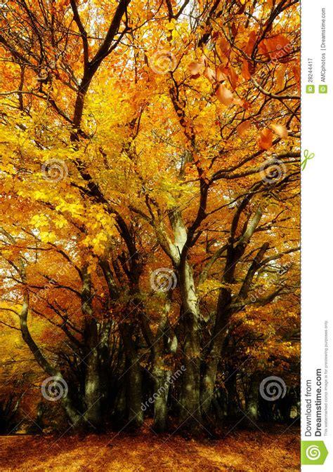 Kaos Print Magic Tree M orange magic tree stock image image of peaceful seasonal