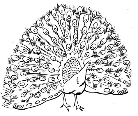 best quality peacock adult coloring pages printable clean