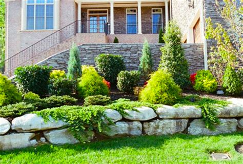 Landscape Ideas Using Evergreens Types Of Evergreens For Landscaping Trees And Shrubs
