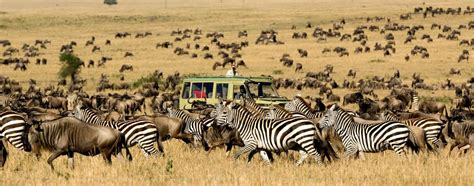 Search Designs by African Safari Tours Mango African Safaris