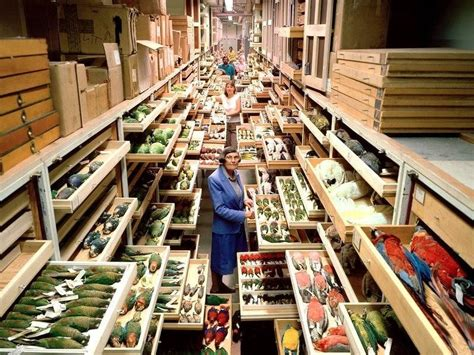 room archives a view inside smithsonian s archives shows the richness of their collections