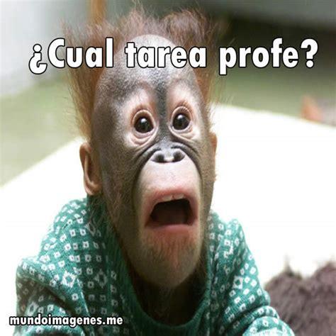 imágenes muy graciosas de animales imagenes graciosas de animales en facebook mundo