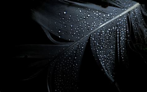 black water water drops black background wallpaper 2560x1600
