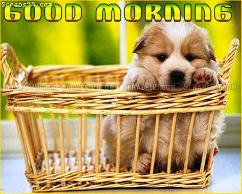 morning puppy morning www pixshark images galleries with a bite