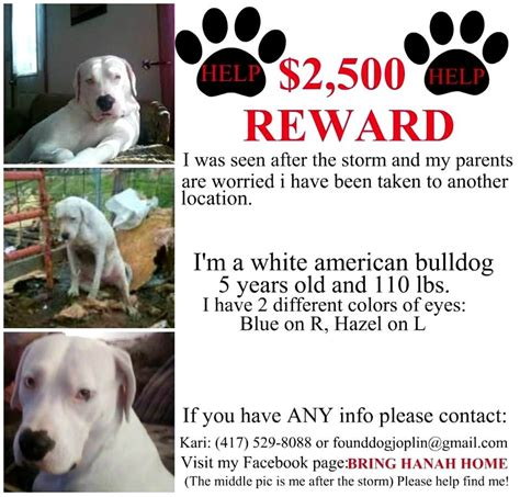 missing dogs help us find these missing pets