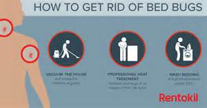 bed bug bites what you need to