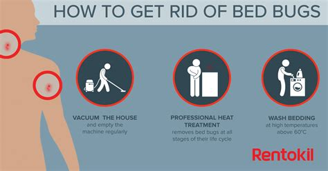 how to rid of bed bugs bed bug bites what you need to know