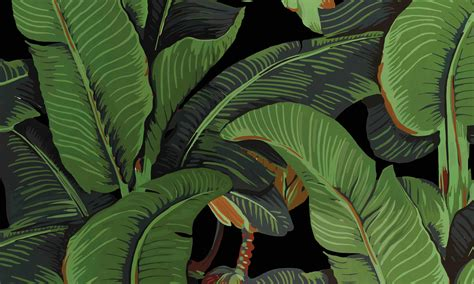 black bananas wallpaper black banana leaves wallpapers black banano leaf
