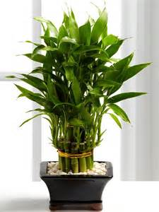 good house plant good luck plants for home home design architecture