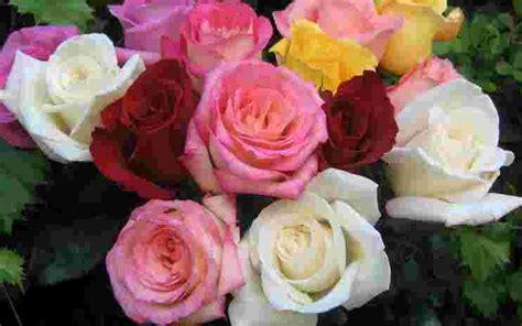 gambar bunga  macam macam jenis indah langka