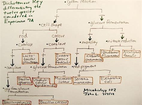 microbiology flowchart unknown bacteria 1000 images about microbiology flow charts on