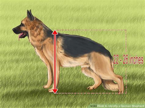 dogs that look like german shepherds 5 ways to identify a german shepherd wikihow