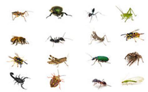 scorpioni in casa come eliminarli grasshopper stock photos images pictures 14 211 images