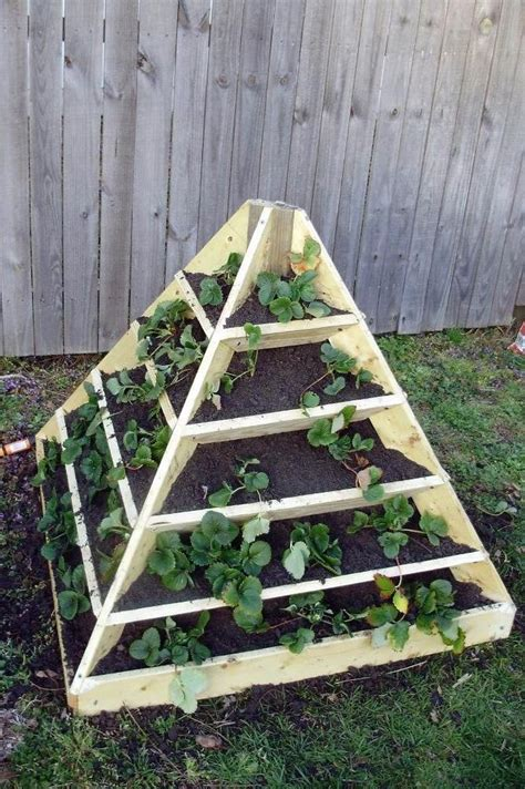 raised strawberry bed strawberry pyramid raised bed beneath it all is a layer of newspaper followed by