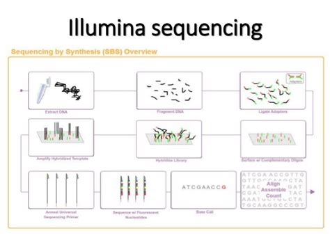 illumina sequencing service illumina dna sequencing 28 images sequencing quality