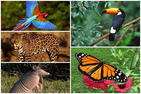 imagenes de venezuela flora y fauna protecci 243 n de la fauna y flora de venezuela fauna venezolana