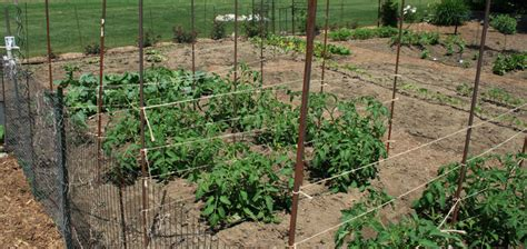Practical Crop Rotation A Second Look My Everchanging Crop Rotation Home Vegetable Garden