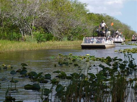 airboat gator park airboat picture of gator park miami tripadvisor