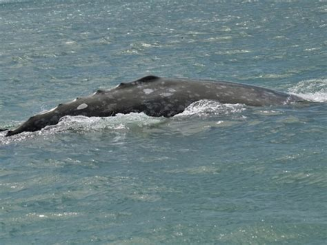 whale watchers can look for various species on oregon