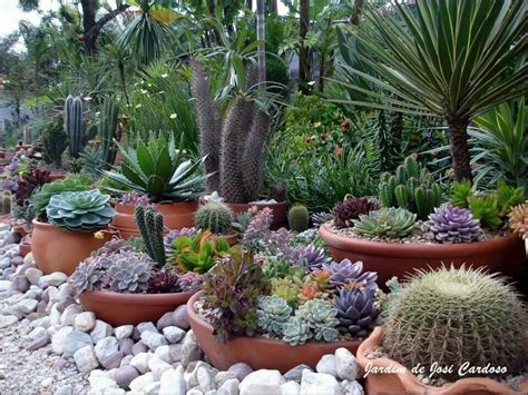 cactus gardens gardening pinterest
