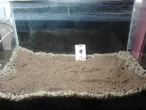 cara membuat aquascape rock cara membuat aquascape di aquarium dengan cara yang mudah