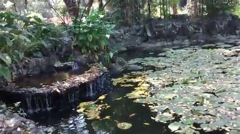 cataratas y cascadas en el jard 237 n 75 ideas jardin botanico de cu mxcity jardin botanico de la unam