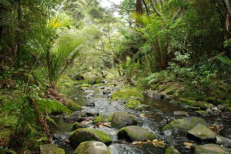 amazon nz daniel solis dr remedy grove amazon rain forest