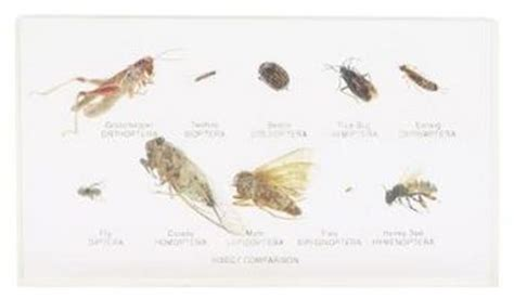 cimici dei letti dove vivono insetti simili bed bugs salute sigcins