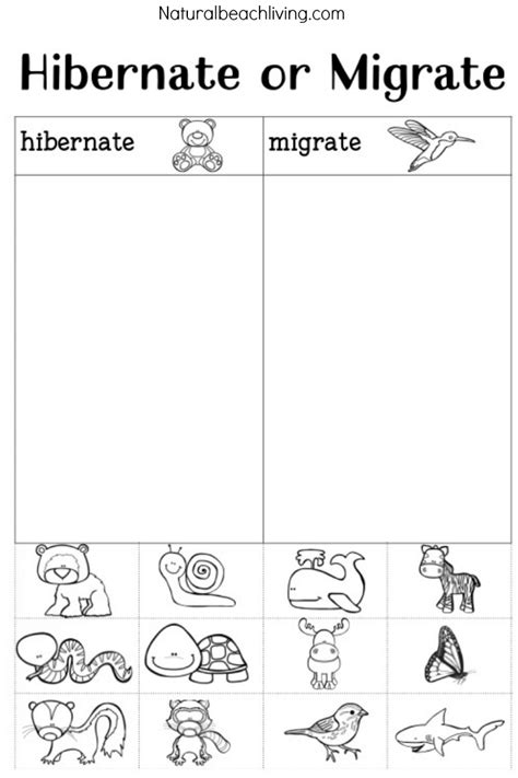 Hibernation Worksheets by The Ultimate Winter Animals For Preschool Activities