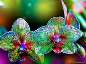 Best Flower Food beauty nature flower desktop image wallpapers new hd